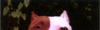 Mme_les_pitbulls_pleurent_10