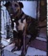 Pit_le_chien_1
