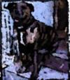 Pit_le_chien_2